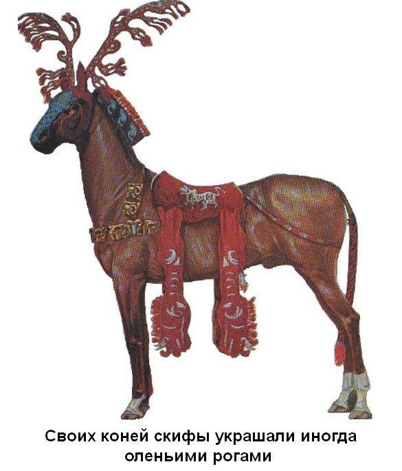 koni-oleni-roga
